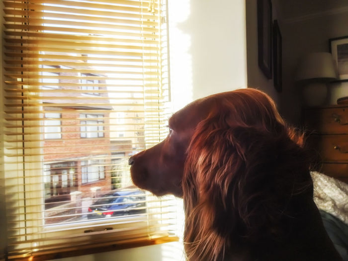 Waiting for mum Dog Redsetter Irishsetter Pets Of Eyeem Pets Waiting Looking Women Young Women Window Redhead Looking Through Window Headshot Depression - Sadness Blinds Close-up