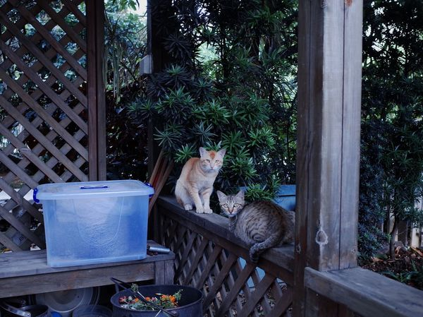 wild cat Gr2 Ricoh Gr Domestic Animals Animal Themes Domestic Plant Animal Cat