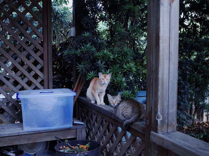wild cat Gr2 Ricoh Gr Domestic Animals Animal Themes Domestic Plant Animal Cat