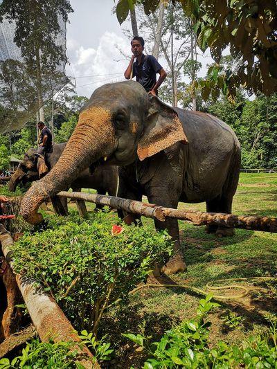 National Elephant Conservation Centre EyeEmNewHere EyeEm Selects Elephant Tree Safari Animals Asian Elephant