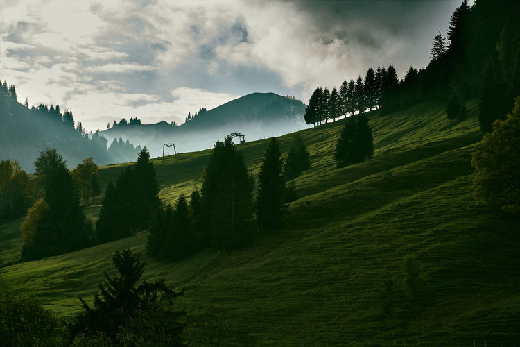 Allgäuer Alpen Arrival Backgrounds Bavarian Landscape Beauty Beauty In Nature Cloud - Sky Forest Green Color Hiking Landscape Lush - Description Mountain Mountain Range Nature No People Outdoors Pinaceae Pine Tree Pine Woodland Sky Travel Destinations Tree Tree Area
