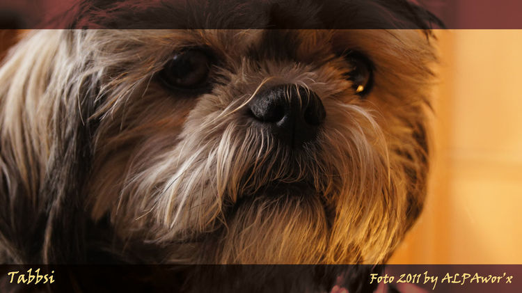 WE MISS YOU VERY !!! She was our third Child!!! [Died on 22.08.2016] Close-up Died Dog Doggirl Dog❤ Extreme Close Up EyeEm Like A Child Looking At Camera Lost Lost Dog Lost Love Miss You Missing You My Love ❤ My Lovely Dog Pets Tadaa Tadaa Community Tadaa Friends Taking Photos Talking Pictures