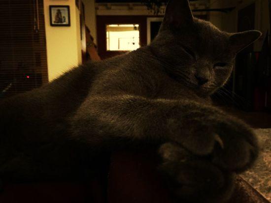 Cat Romeo Enjoying Life Instapadova