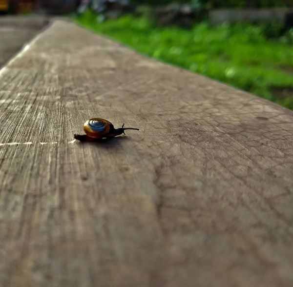 Tiny snail slowly moving towards its destiny..Insect One Animal Animals In The Wild Animal Themes Animal Wildlife Outdoors Close-up Nature Snail Photography Snail Trail Snails Morning Light Concrete Slow Life Shells🐚 Moving Mobilephotography