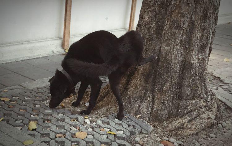 สุนัขฉี่รดต้นไม้ Dog Peeing Dog Dogs Of EyeEm Pee Animal Themes One Animal Domestic Animals Pets Mammal No People Day Outdoors
