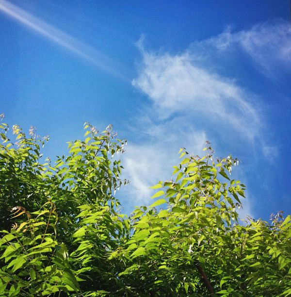 Great warm morning Blue Sky Clounds And Sky Green And Blue Green Color Outdoors Tree Warm Morning