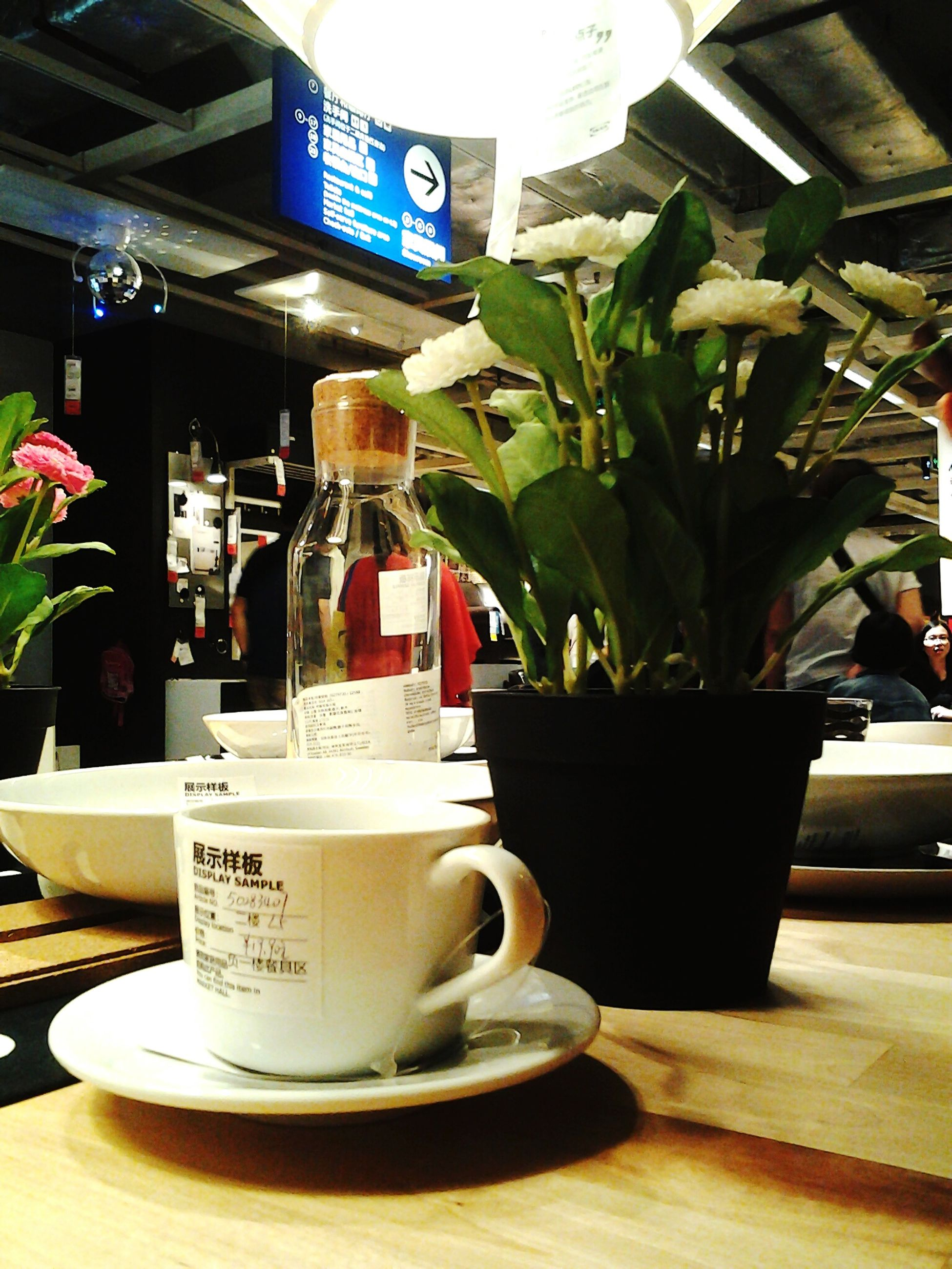 drink, table, text, food and drink, indoors, coffee cup, freshness, refreshment, western script, still life, communication, close-up, saucer, coffee - drink, cup, book, flower, no people, coffee, potted plant