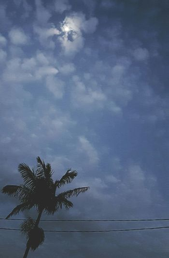 Palm Tree Sky Nature Cloud Outdoors No People Growing