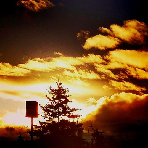 Sunset Sky Dramatic Sky Cloud - Sky Tree No People Low Angle View Nature Outdoors Mountain Beauty In Nature Scenics Night Milky Way Star - Space Galaxy Astronomy Cloud Formations Cloud And Sky Cloudy Skies Day Veiwpoint Of A Homeless Seattle Girl Puget Sound, Washington Seattle, Washington Washington State