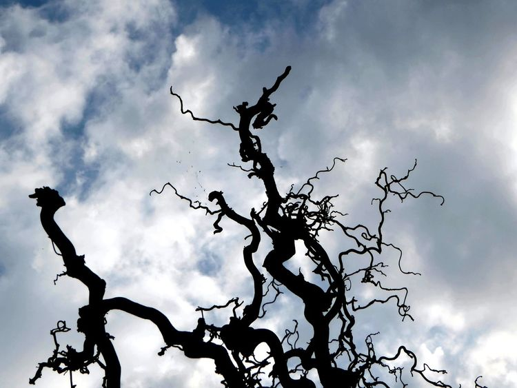 Favorite Plants Silhouette Nature Beauty In Nature Looking Up😍 Celebrate The Little Things Enjoyinglife  Thankful✨ Cloudy Skys For My Friends 😍😘🎁 Eye4photography  Perfect Perspective Simple Beauty Nature