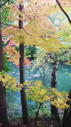 Beauty In Nature Autumn Tree Outdoors Nature Forest River View Autumn Leaves Autumn Colors Autumn Collection Autumn 2016 Autumnbeauty Authentic Moments