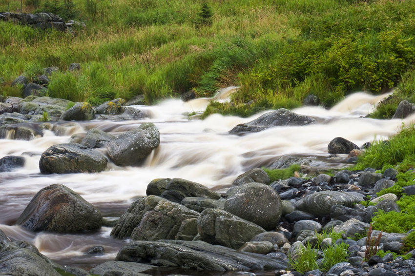 Mountain river stream, Cloudy weather, Norway, August. Blurred Falling Flowing Lichen Morning Nature Rock Tranquility Cold Environment Foliage Landscape Mist Motion Non-urban Outdoors Rapid River Scene Smooth Speed Stone Stream Water Waterfall