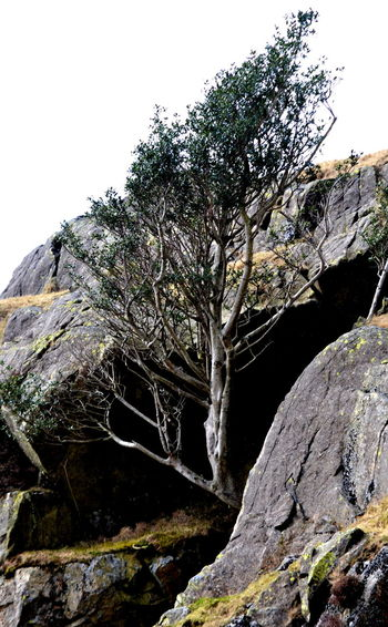 Beauty In Nature Branch Clear Sky Close-up Day Nature No People Outdoors Sky Tree Tree In Rocks Tree_collection