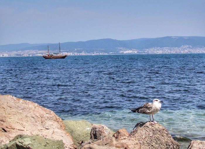 Sea Möwe Ship Moments Of My Life My Life Bulgarien Bulgaria