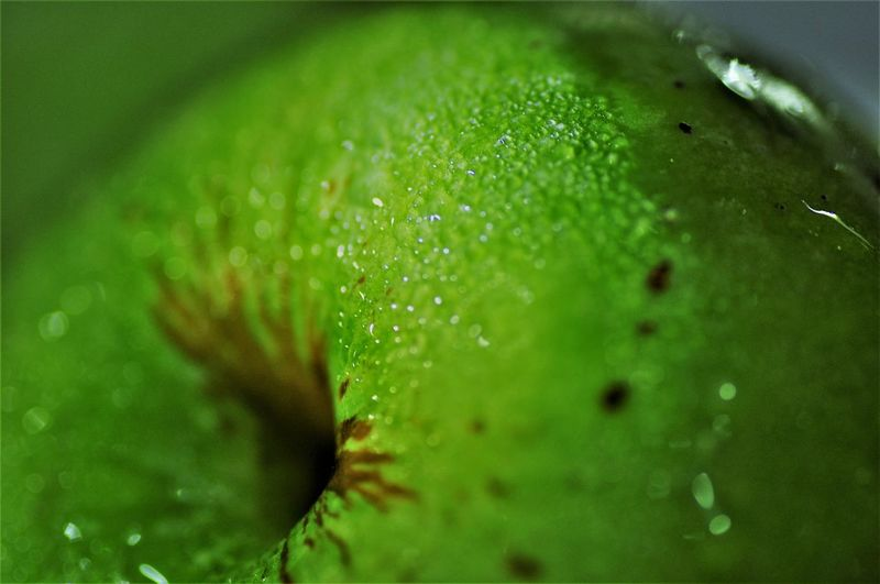 An apple a day keeps doctor away EyeEm Selects Photography Photographylovers Macro Photography Macro DSLR Hobby Green Color Green Water Backgrounds Healthcare And Medicine Full Frame Drop Close-up Grass Green Color Dew