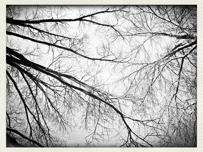 Nature EE_Daily: Black And White Sunday KC Through KCe EyeEm Best Shots - Trees