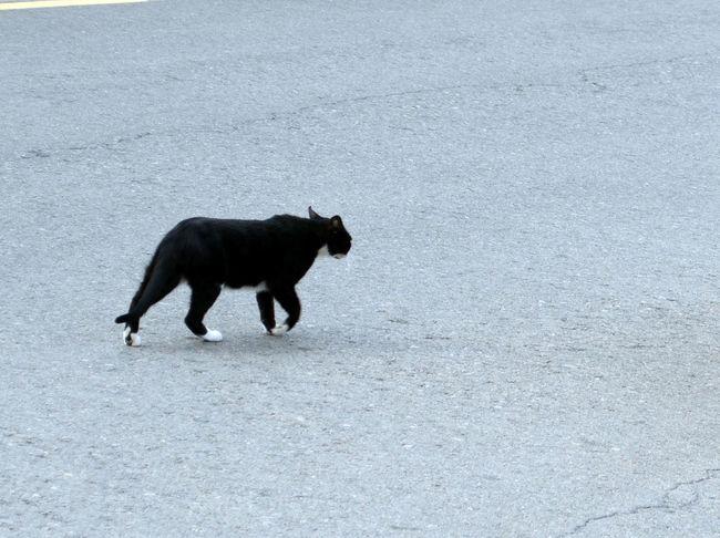Calatayud, la ciudad de los castillos, me largo de aquí. 2015  Animal Themes Calatayud Day Domestic Animals Eddl Mammal Nature No People One Animal Outdoors