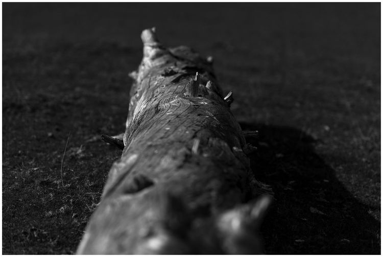 Tree Log Tree Trunk Black And White Friday Blackandwhite Photography Close-up Day Grass Monochrome Photography Nature No People Outdoors Selective Focus