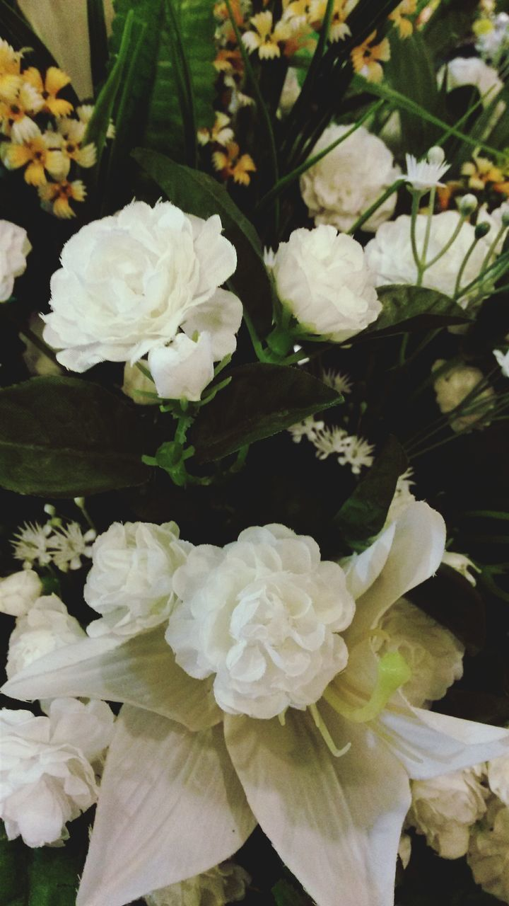 flower, white color, beauty in nature, nature, petal, fragility, flower head, no people, freshness, rose - flower, plant, blossom, day, close-up, growth, outdoors
