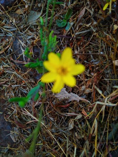 De focused Mobilephotography Marsh Flowering Plant Yellow Defocused Blurred Blurry Blurry On Purpose Nature Grassland Grassy Close Up De Focused Defocused Foreground No Man Forest Flower Flower Head Yellow Close-up Plant