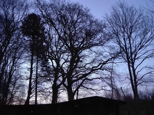 Silhouettes of Bare Trees in the Danish Countryside - Silhouette Sorø Danmark Denmark Day No People Winter Sky Tree Outdoors Nature