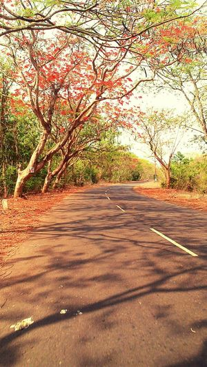 Crazy Chilling Countryside Loveit♥ Travelling Woods Travelling Photography Red Flowers Enjoyedalot Crazy Moments