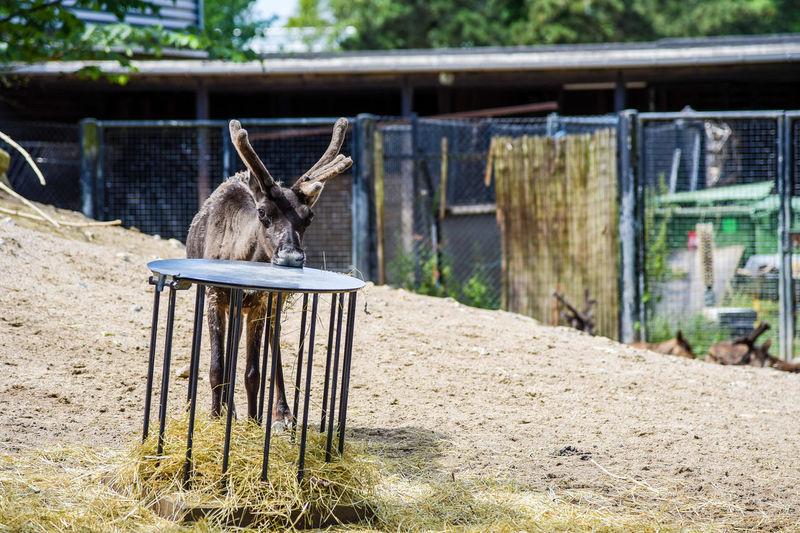 Horse cart on wood