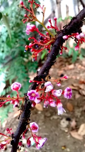my first picture 🔥 Tree Flower Head Branch Springtime Fruit Pink Color Red Blossom Close-up First Eyeem Photo