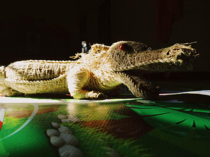 Pet Portraits Reptile Animal Wildlife Animals In The Wild Animal Themes Crocodile Black Background Green Color Night Camouflage Close-up Nature Alligator Fine Art Photography The Week On EyeEm EyeEmNewHere The Still Life Photographer - 2018 EyeEm Awards