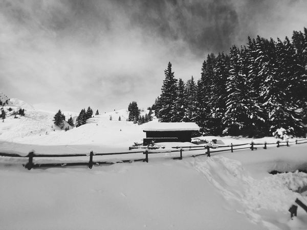 South Tirol South Tirol VSCO Mountains Forest Snow Black And White Vscocam IPhone Italy