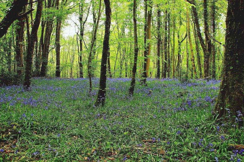 Killinthomas Wood .. a magical place. Full of Bluebells and birdsong. In The Landscape Tadaa Community EyeEm Nature Lover Hanging Out