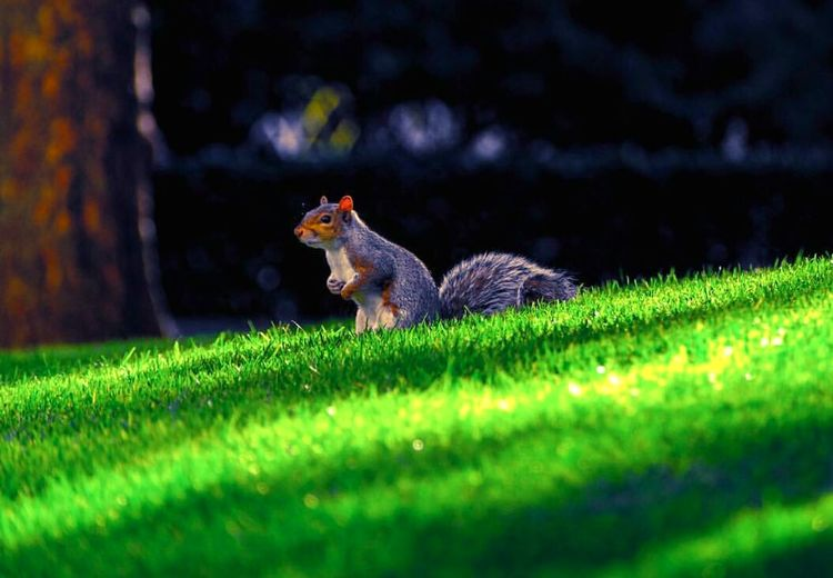One Animal Grass Animal Wildlife No People Green Color Animals In The Wild Nature Animal Themes Outdoors Mammal Tail Day Wanderlust Photography Green Color Tranquility Sincappp Sincapcikk Sincap