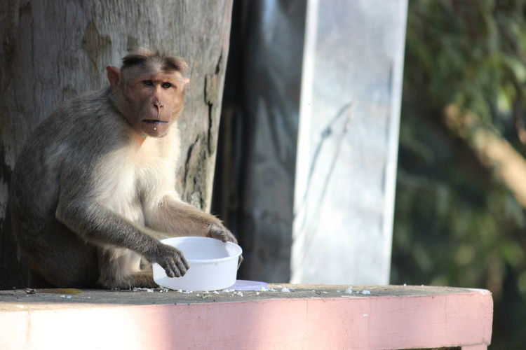 Monkey sitting with a meal box