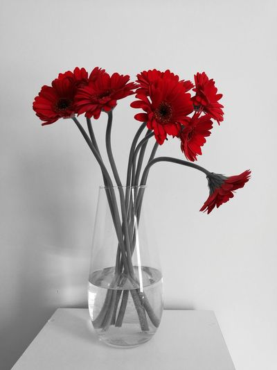 Close-up of red flowers in vase against white background