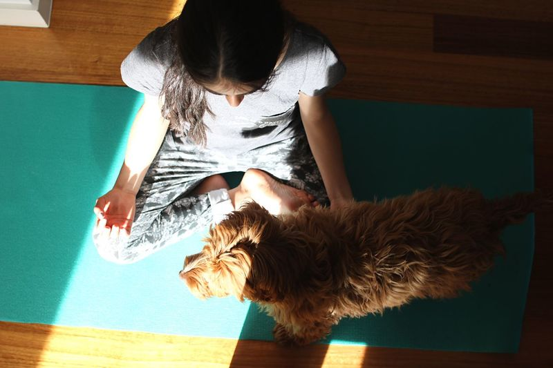 Full Length Of Girl Exercising By Dog While Sitting At Home