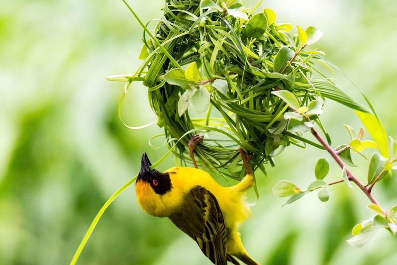 Masked Weaver Animals In The Wild Animal Themes One Animal Insect Nature Animal Wildlife Focus On Foreground Close-up Growth Flower No People Day Outdoors Maskedweaver Maskenweber Bird Africa Fragility Beauty In Nature Freshness Perching Pollination