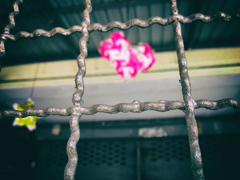 Chain Close-up Day Drop Fence Flower Focus On Foreground Fragility Freshness Hanging Heart Metal Nature Outdoors Pink Protection Railing Red Heart Safety Season  Steel Cage Twig Wall