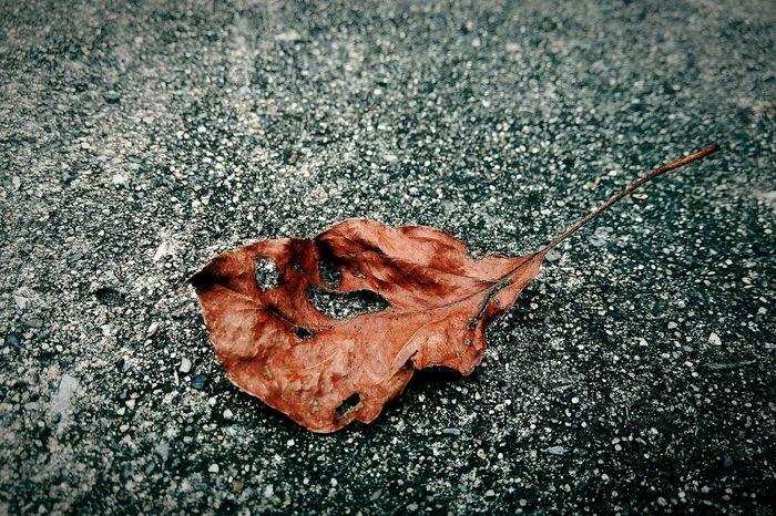 僕の好きな人が僕を好きとは限らないという辛さ Hello World Autumn Leaves Autumn2015 Brown Leaf  Feel Lonely
