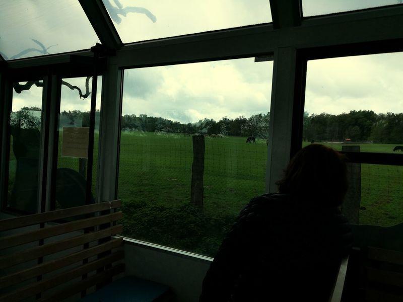 Busfahrt mit Ausblick Tree Window Sky Cloud - Sky Farmland Looking Through Window