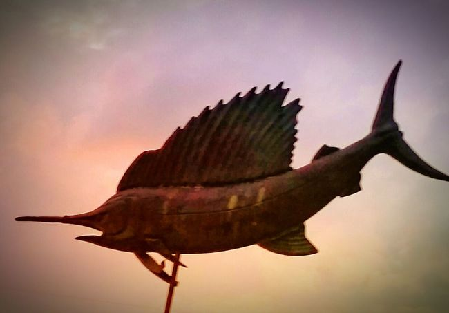 Sailfish Wind Vane Pink Sky