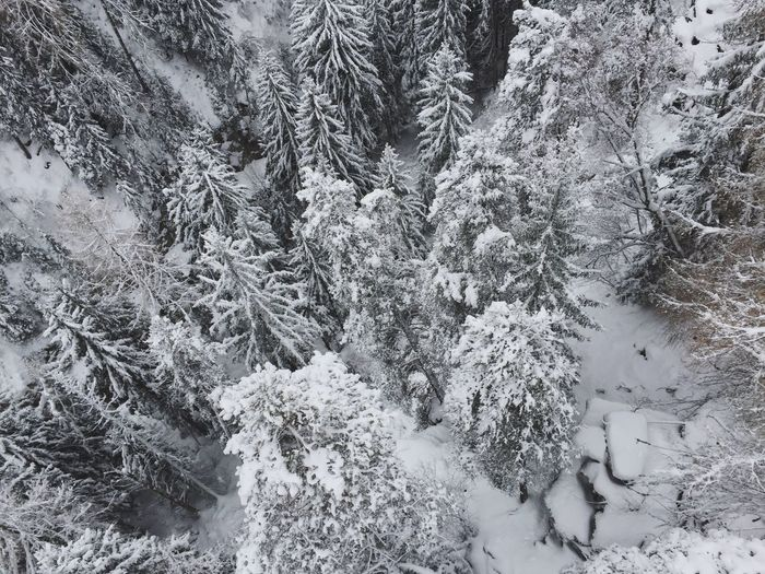 Bäume Switzerland Fiesch Winter Snow Cold Temperature Nature Tree No People Weather Outdoors Frozen Tranquility Beauty In Nature Day Spruce Tree Forest Scenics Snowing