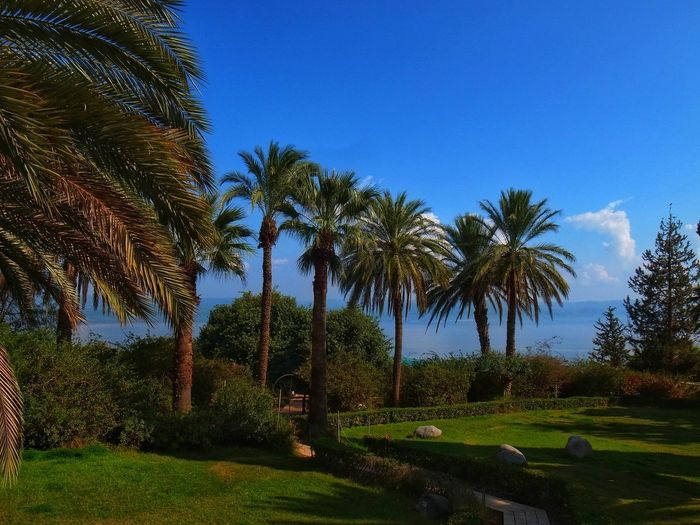 Palm trees on landscape against clear blue sky