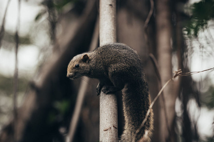 Squirrel 2/3~ Animal Animal Themes Animal Wildlife Animals In The Wild Branch Close-up Day Focus On Foreground Forest Herbivorous Land Mammal Nature No People One Animal Outdoors Plant Rodent Tree Vertebrate Whisker Zoology