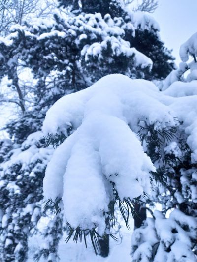 Close-up of snow covered trees on field