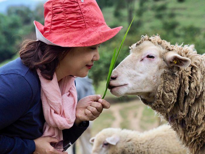 Side view of woman feeding plant to sheep at farm
