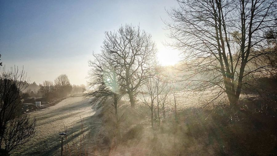 Morgennebel Photographer Photo Photooftheday Picoftheday Morning Sunlight Morning Light Shadow Sky Tree Nature Plant No People Day Outdoors Beauty In Nature Window Sunlight Scenics - Nature Low Angle View