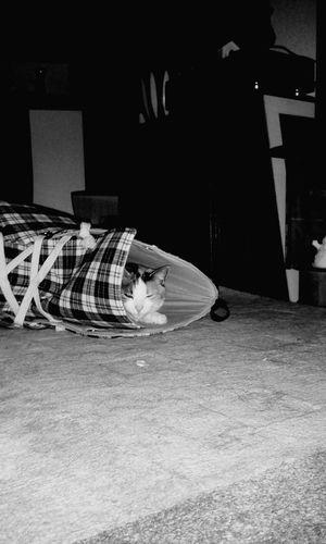 Katze im Schuh... Meine Katze Lilli💋 Bei Mir Zu Hause Verstecken und doch gefunden.. Cats Of EyeEm Cat♡ I Love My Cat