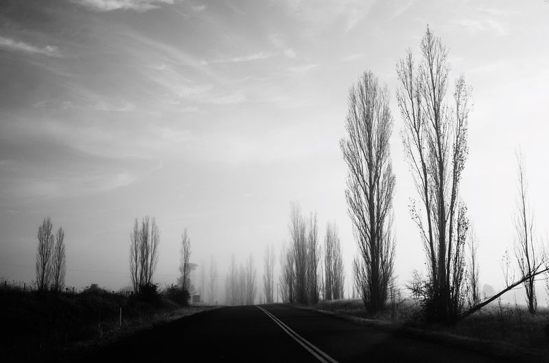 Travel Winter Blackandwhite Tree Plant Sky Nature Transportation Cloud - Sky No People Beauty In Nature Tranquility Day Road Land Tranquil Scene The Way Forward Growth Direction Forest Outdoors Silhouette Non-urban Scene