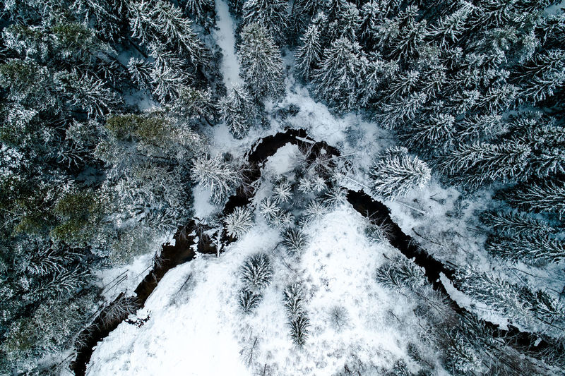 High Angle View Of Snow Covered Trees On Landscape