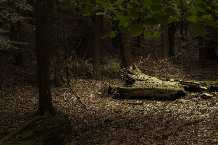 View of an animal on tree trunk in forest